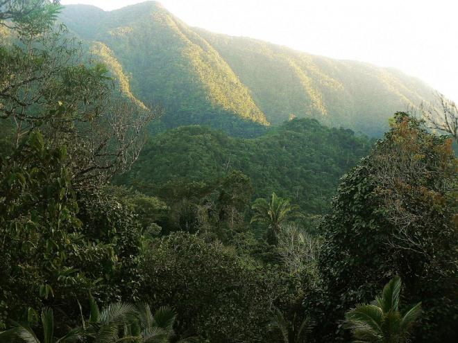habitat REES (20)